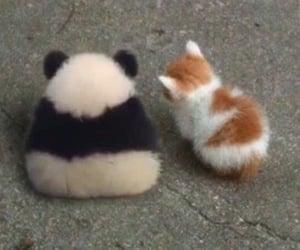 meme, animals, and panda image