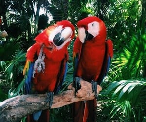 parrot, animal, and nature image