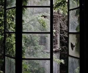 window, nature, and tree image