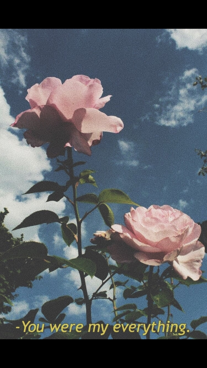 article, flowers, and sadness image