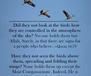 allah, birds, and philosophy image