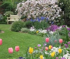 aesthetic, Fleurs, and jardin image