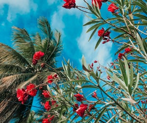 flowers, inspiration, and tropical image