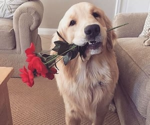 dog, animal, and love image