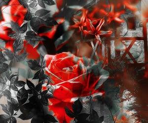cores, padrão, and amor image