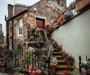 colours, flowers, and history image