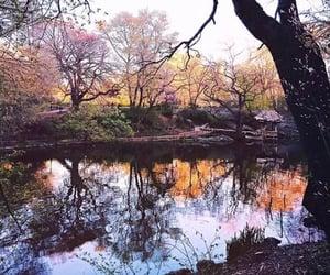 autumn, beautiful, and garden image