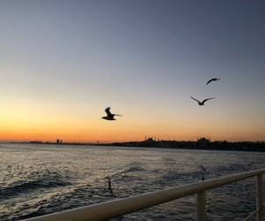 bird, blue, and free image