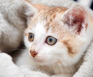 cat, gatito, and kitten image