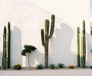 cacti and mexico image