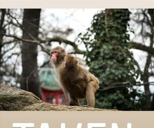 monkey and taken image