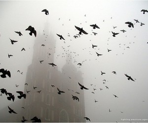 bird, black and white, and fog image