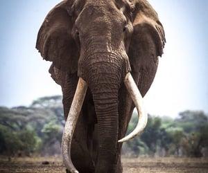 africa, Afrika, and animal image