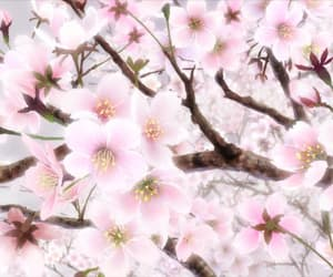 anime, japan, and cherry blossom image