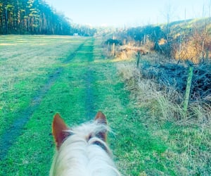 country, horse, and field image