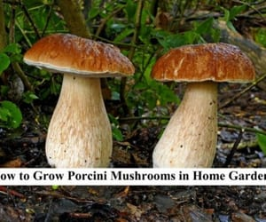 grow mushrooms image