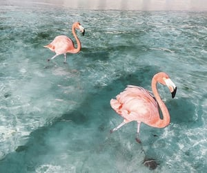 animal, aruba, and flamingo image