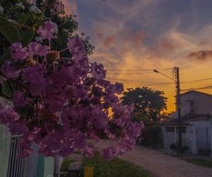 autoral, blossom, and flourish image