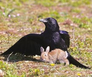 animal, bunny, and animals image