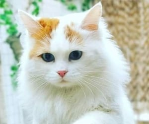 animals, cats, and pets image