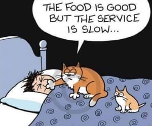 funny and cat humor image