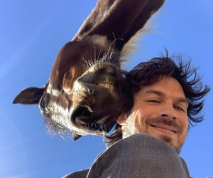 actor, animals, and beautiful image
