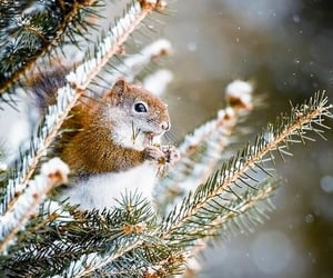 winter, squirrel, and snow image