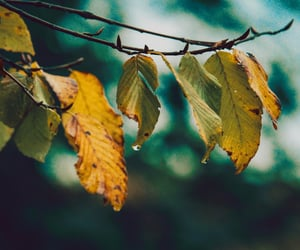 leaf, leaves, and nature image
