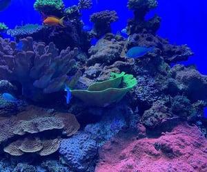 aquarium, california, and San Diego image