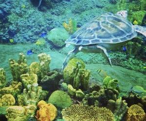 aquarium, San Diego, and photo image