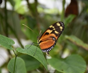 butterfly, nature, and ireland image