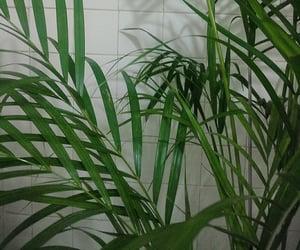 decoracion, plantas, and plants image