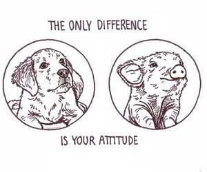 animal, animal rights, and vegan image