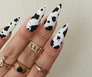 cow, nails, and cute image