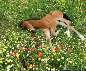 animal, flowers, and horse image
