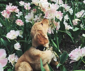 animal, cute dog, and dogs image