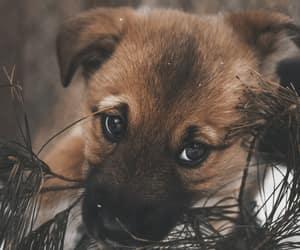 animal, dog, and dogs image