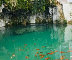beautiful, goldfish, and green image