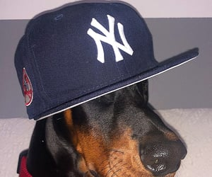baseball, doberman, and cap image
