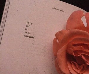 quotes, rose, and book image