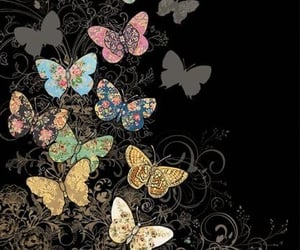 butterflies and wallpapers image