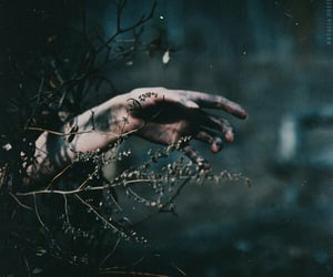 aesthetic, forest, and hand image