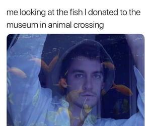 animal crossing, nintendo, and funny image