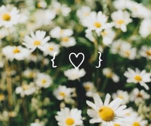 beautiful, garden, and sunshine image