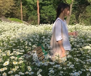 countryside, daisy, and grass image