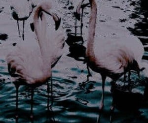 blue, dark, and flamingo image