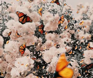 flowers, background, and butterfly image