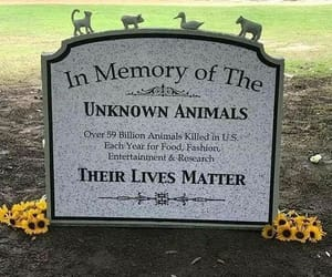 protect the innocent, fight for animal rights, and save animals image
