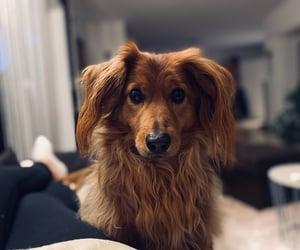 dog, hungry, and doggo image