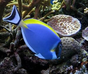 aquatic, naturally beautiful, and fish image